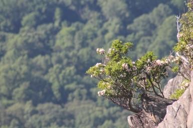 98 - Virginia - Humpback Rocks